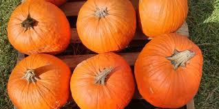 Central Wisconsin Pumpkin Patches by 30 Perfect Pumpkin Patches In Indiana You Need To Know About
