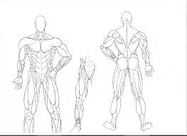 Human Anatomy Coloring Pages Muscles