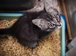 unsauberkeit bei katzen was hilft wirklich zooroyal magazin
