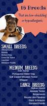 Low Shedding Dogs In India by Best 25 Small Hypoallergenic Dogs Ideas On Pinterest Small