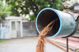 removing roots from drain pipes home matters