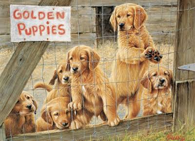 Cobblehill Golden Puppies Puzzle - 500pcs