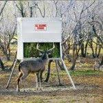 The 25 best Deer corn ideas on Pinterest