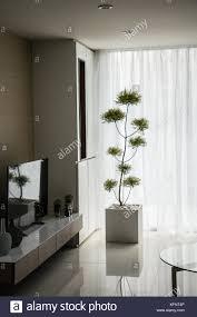 eine dekoration pflanze in eckigen topf im wohnzimmer setzen