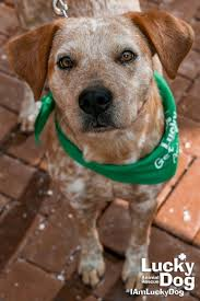 Non Shedding Dogs Small To Medium by Adopt Lucky Dog Animal Rescue