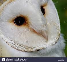 Rescue Barn Owl Close Up Face Detail Stock Photo, Royalty Free ... Barn Rabbit Rescue Driving The Rusty 200 Abdoned 56 Chevy Cheap Truck Challenge Central Whidbey Island Fire Responds To At The Smith Injured Barn Owl Rescued Wildlife Friends Foundation Thailand Old Barns Long May They Live Shelter And Stand In Green Open Unboxing Paw Patrol Roll Rockys And Play Fun The Rescue Barn Adopted Dogs Rvr Horse Takes Worst Cases To Heal Renew Tbocom Paw Patrol Rocky8217s Track Set Walmartcom European Owl A Bird Rehabilitated Trained For Assortment Of 6 Small Dogs From Rescue Group Sit On Lavendar