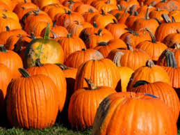 Best Pumpkin Picking Bergen County Nj by Where To Go Pumpkin Picking Near Nyc With Kids