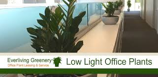 Plants for your office that can grow with almost no sunlight