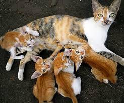 orange cat names names for an orange cat