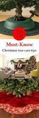 Fraser Christmas Tree Care by Best 25 Fresh Christmas Trees Ideas On Pinterest Mini Christmas