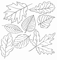 Great Fall Leaf Outlines Kids Coloring PagesFall