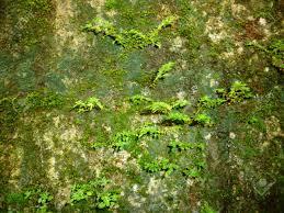 Seamless Moss Old Green Wall Stone Pattern Mold Gray Texture Background Rock Brick Fungus Stock Photo
