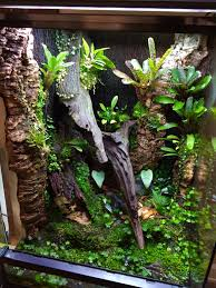 Crested Gecko Halloween Morph For Sale Uk by The 25 Best Gecko Terrarium Ideas On Pinterest Gecko Cage