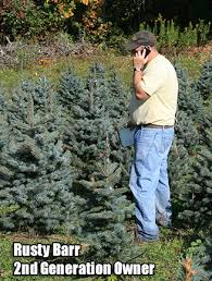 Fraser Fir Christmas Trees Nc by Best Wholesale Christmas Trees