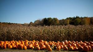 Pumpkin Picking In Ct by 12 Scenic Pumpkin Patches To Visit Throughout New England