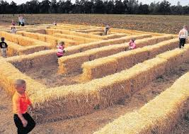 Best Pumpkin Patch Wichita Ks by 12 Of America U0027s Best Pumpkin Patches To Visit This Fall Cocoro