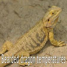 Bearded Heat L Timer by 72 Best Bearded Articles Images On Dragons