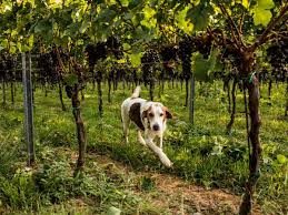 10 Dog-Friendly Wineries In Virginia And Maryland Bull Barn Cottage Natural Retreats The At Turkey Ridge Llc Venue Charlottesville Va Holiday Holidaybarn Twitter Klines Mill Linville Weddingwire Dog Boarding Day Care In Glen Allen Owl Youtube Vintage Mulberry Springs Houses For Rent Lovework Burkes Garden Virginia Is For Lovers Home Of Silverbrook Kennels Fredericksburg Pet Dating Welcome To Dog Door Barn Pipethis Is Photo 2 3 The Dog Door