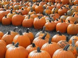 Best Pumpkin Patches Near Milwaukee by A Handy Guide To Halloween In Milwaukee Urban Milwaukee