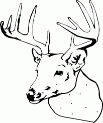Elk Coloring Pages Bull