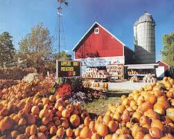 Goebbert Pumpkin Patch In Barrington Il by 135 Best Pumpkin Farm Market Images On Pinterest Pumpkin Farm