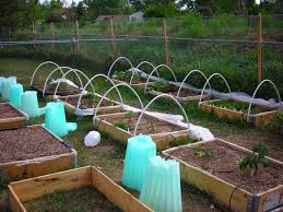 Whats In My Garden O Fort Collins Nursery