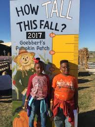 Goebbert Pumpkin Patch In Barrington Il by Goebbert U0027s Pumpkin Farm South Barrington Il Top Tips Before