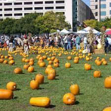 South San Jose Pumpkin Patch by Pumpkins In The Park Sanjose Com