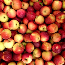 Apple And Pumpkin Picking Maryland by Pick Your Own Pumpkin Patch And Apple Orchard