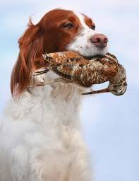 Best Gun Dog Supplies For Game Hunters To Assist You Both On Hunts