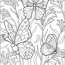 Butterflies Coloring And Dover Publications On Pinterest
