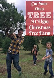Leyland Cypress Christmas Tree Growers by Cut Your Own Christmas Tree At Elgin Christmas Tree Farm Elgin Tx