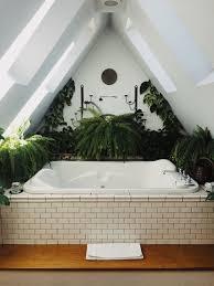 diese 9 zimmerpflanzen gedeihen auch im badezimmer amicella de