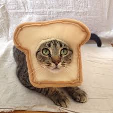 costume for cat bread your cat costume for cats