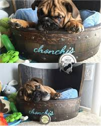 Do Bullmastiffs Shed A Lot by Breeds Archives Natural Dog Company