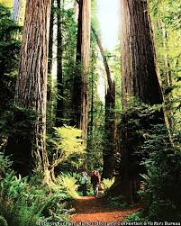 behind the redwood curtain humboldt a separate world of misty