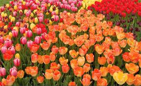 Best New England Spring Flower Festivals 2018