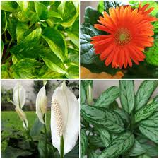 Best Plant For Bathroom by A Breath Of Fresh Air 15 Houseplants For Improving Indoor Air