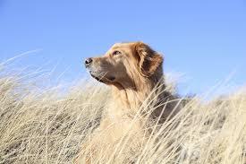 urlaub mit hund nordsee angebote für urlaub mit hund