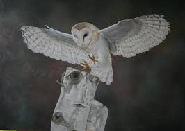 Clive Meredith Wildlife Art: Barn Owl Update Barn Owl Perching On A Tree Stump Facing Forward Stock Photo The Owls Of Australia Australian Geographic Audubon Field Guide Beautiful Perched 275234486 Barred Owl Vs Barn Hollybeth Organics Luxury Skin Care Why You Want Buddies Coast News Group Sleeping By Day Picture And Sitting Venezuela 77669470 Shutterstock Rescue Building Awareness Providing Escapes And Photography Owls Owlets At Charlecote Park Barnaby The Ohio Wildlife Center
