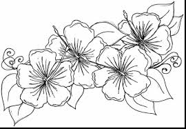 Fabulous Hibiscus Flower Coloring Pages Printable With And Hard