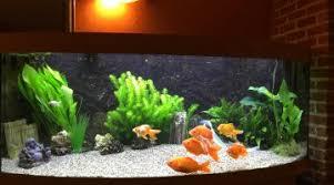 aquarium dans le mur aquarium feng shui
