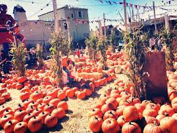 Half Moon Bay Pumpkin Festival Biggest Pumpkin by Mapping The Very Best Pumpkin Patches In The Bay Area