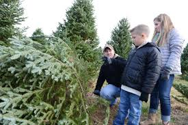 Canaan Fir Good Christmas Tree by The Hunt For Christmas Trees Begins In Lancaster County Local