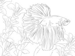 Click To See Printable Version Of Betta Fish Coloring Page
