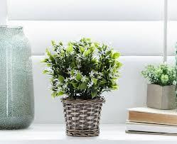 zimmerpflanze ein grüner hingucker zu hause