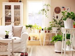Bring Life Color To Your Home Using Decorative Plants Flowers