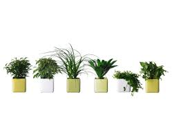 Plants For Bathroom Without Windows by Best Low Light Or Plants Houseplants Mimi Giboin Must Buy A Few