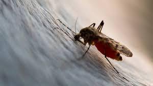 blutsauger unterwegs tipps gegen mücken zecken und co