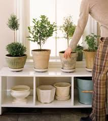 Plants In Bathroom Feng Shui by Good And Bad Feng Shui Plants
